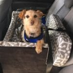 The benefits of a car booster seat for dogs