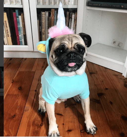 Dog costumes – the do's & don'ts