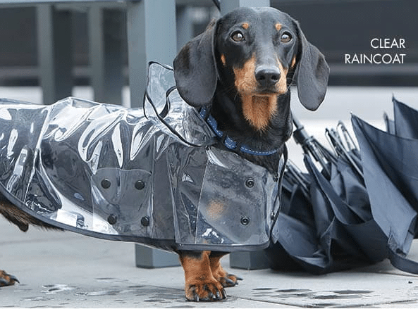 Selecting the right dog coat for your pooch