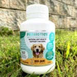 How probiotics promote a healthy digestive system in pets