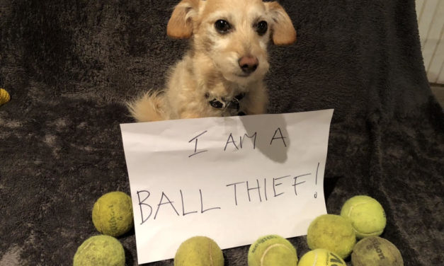 Choosing the right ball for your dog