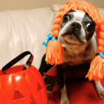 Keeping your dogs safe this Halloween