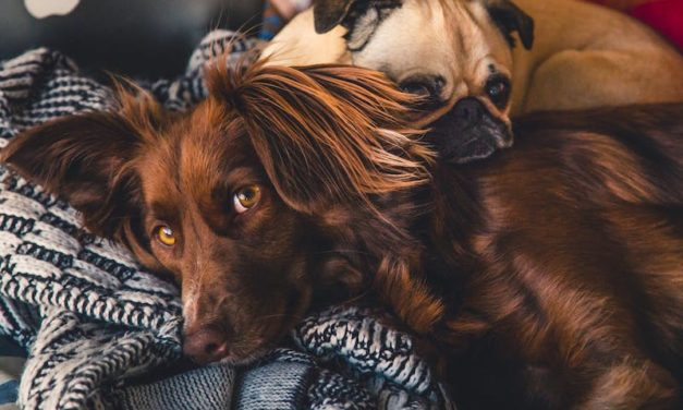 Why you need to protect your dog from Heartworm
