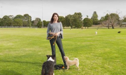 Pooches at Play – Series 3 | Episode 8