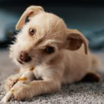 Choosing the right treat for your puppy